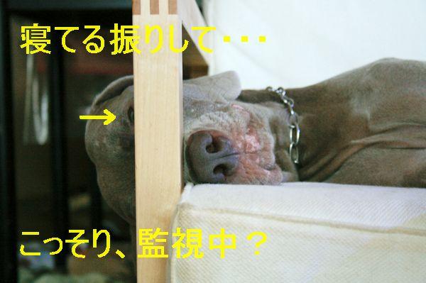 IMG_5068.jpg