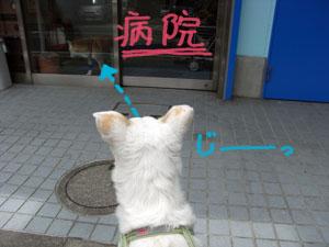 狂犬病予防注射
