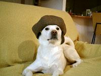 ベレー帽ピクシィ