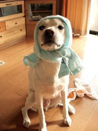 タオルかぶる