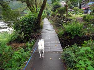 遊歩道を進むピクシィ