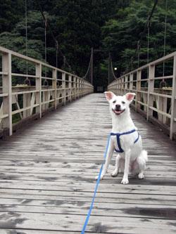 吊り橋で記念写真