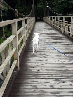 吊り橋を進むピクシィ