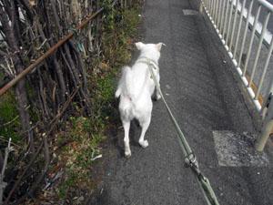 また曇った散歩