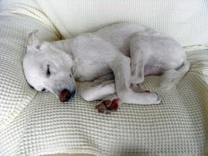 丸まって寝るピクシィ