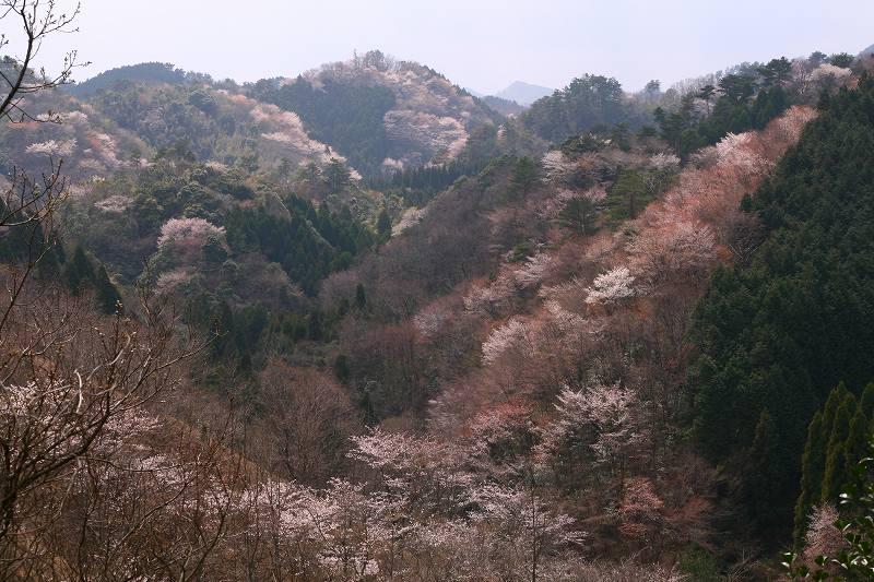 20070401020403.jpg