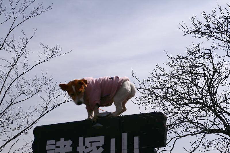 s-諸塚山20080302 044