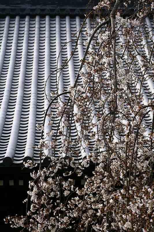 s-桜20080328 045