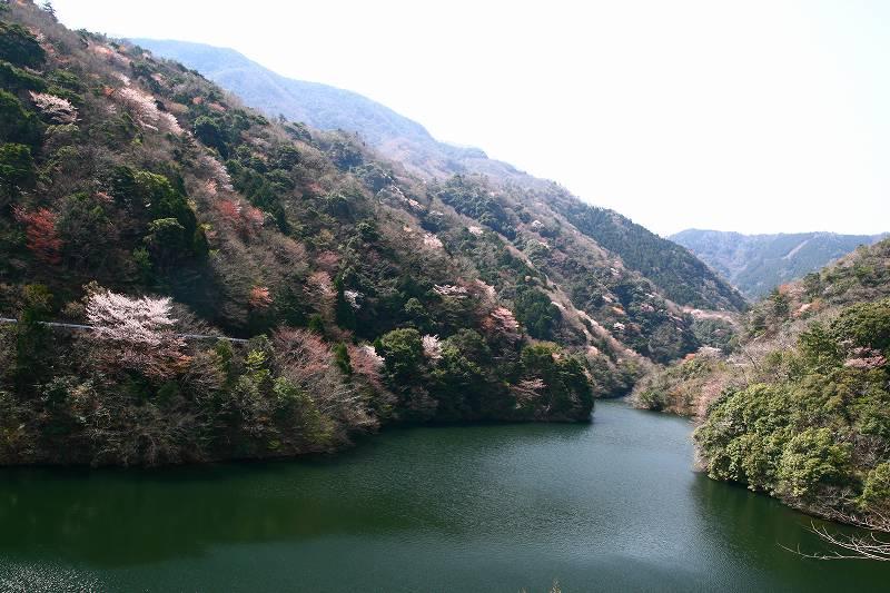 s-桜津久見臼杵20080329 046