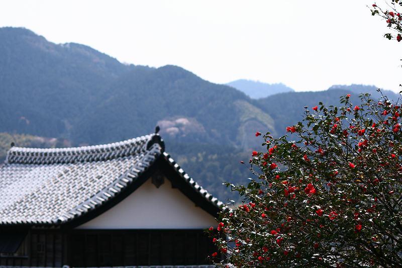 s-桜津久見臼杵20080329 105