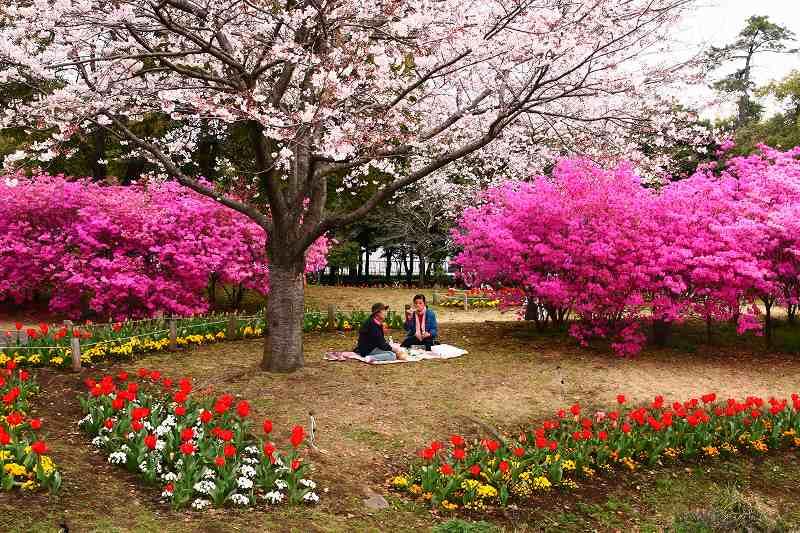 s-桜別府20080402 030