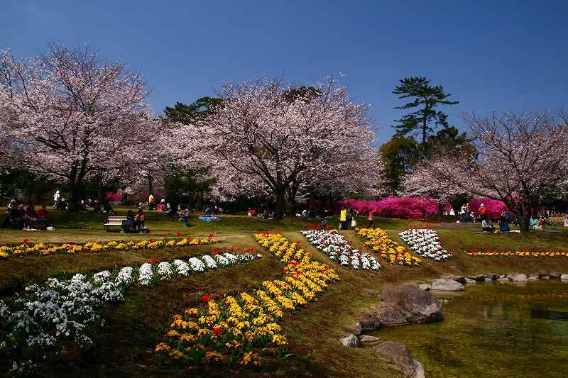s-桜両郡橋中央公園20080403 086