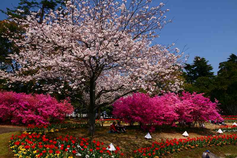 s-桜両郡橋中央公園20080403 082