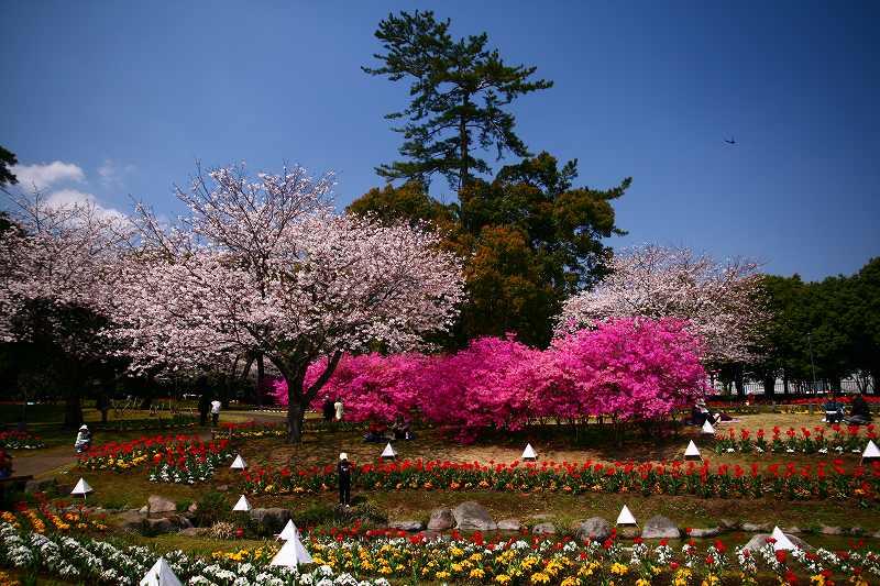 s-桜両郡橋中央公園20080403 081