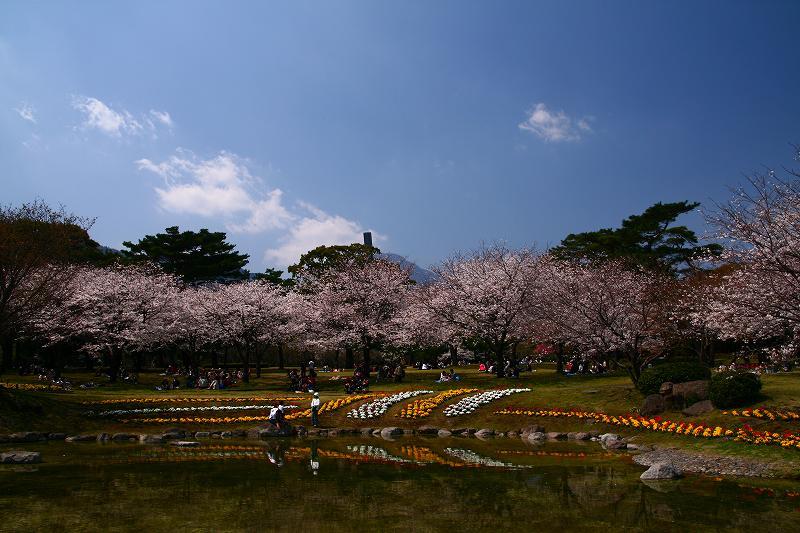 s-桜両郡橋中央公園20080403 074