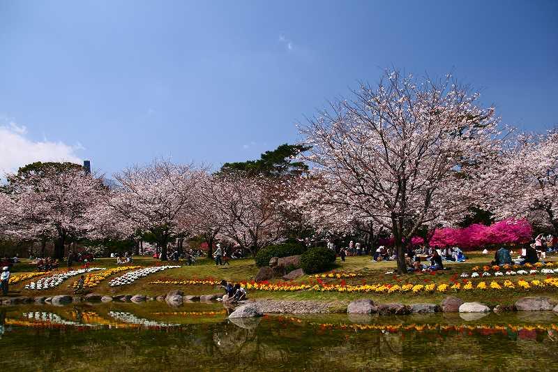 s-桜両郡橋中央公園20080403 078