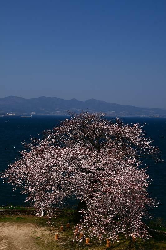 s-桜両郡橋中央公園20080403 123