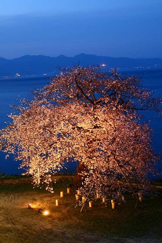 s-桜両郡橋中央公園20080403 168