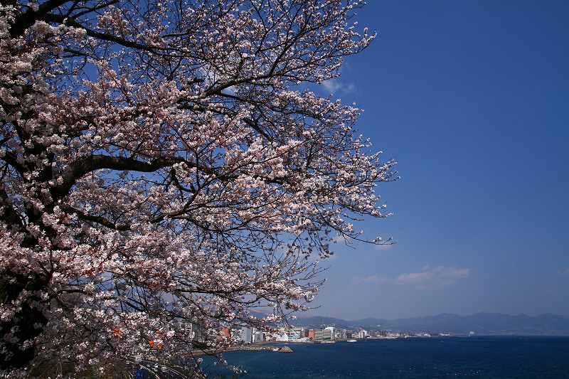 s-桜両郡橋中央公園20080403 007