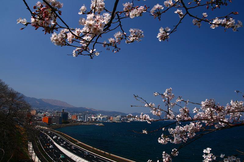 s-桜両郡橋中央公園20080403 109