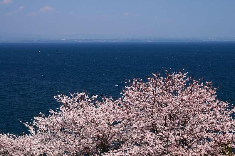 s-桜両郡橋中央公園20080403 027