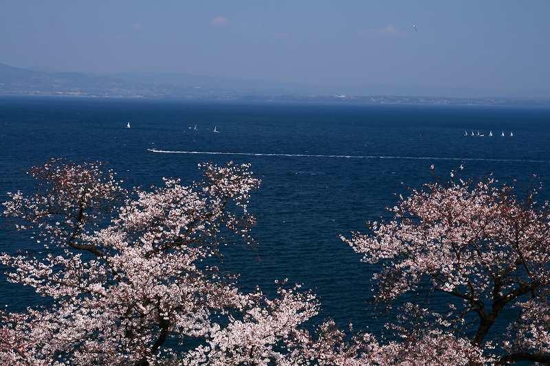 s-桜両郡橋中央公園20080403 045
