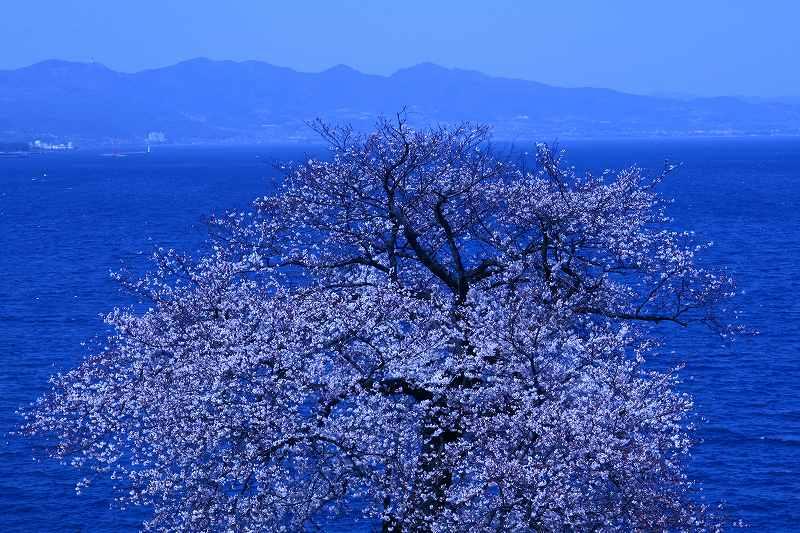 s-桜両郡橋中央公園20080403 119