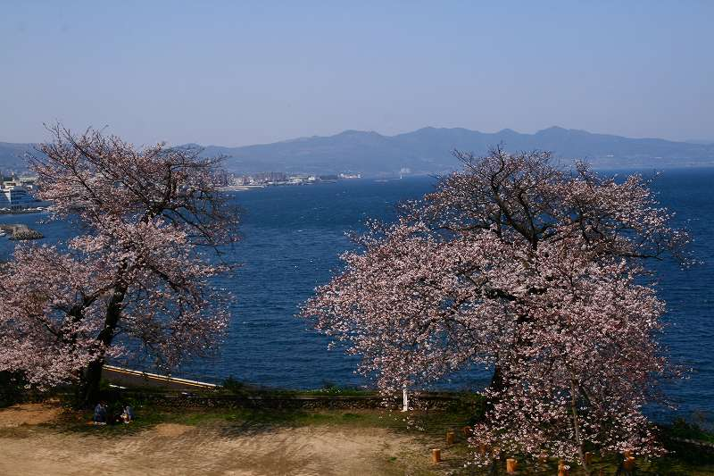 s-桜両郡橋中央公園20080403 124