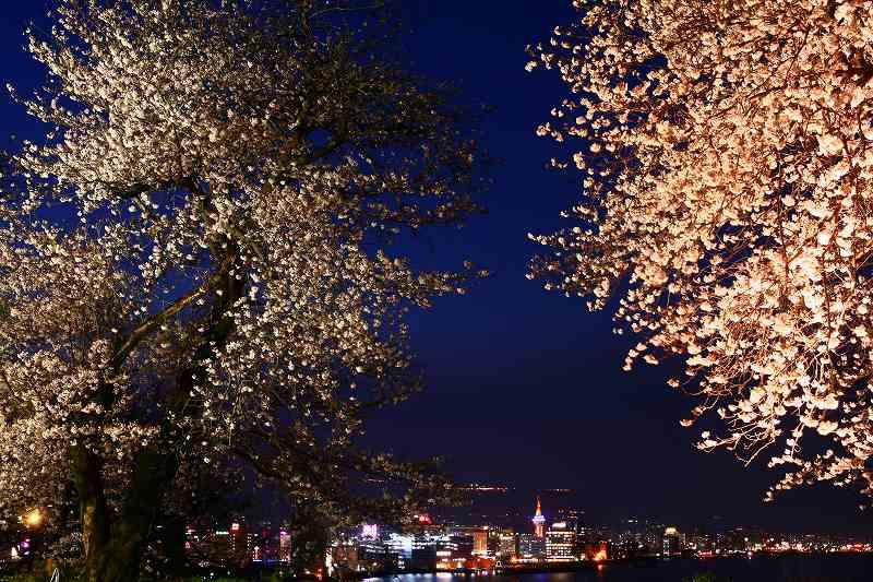 s-桜両郡橋中央公園20080403 181