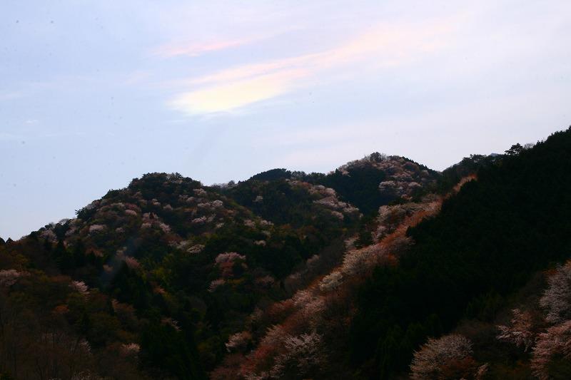s-桜野津原20080411 107