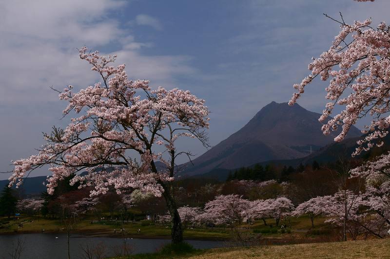 s-桜志高湖湯布院0080412 045