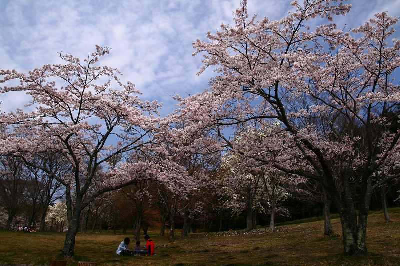 s-桜志高湖湯布院0080412 060