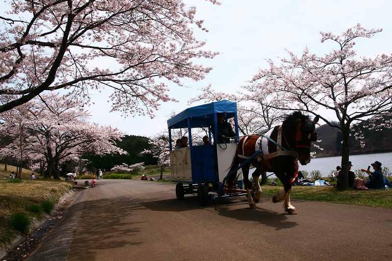 s-桜志高湖湯布院0080412 061