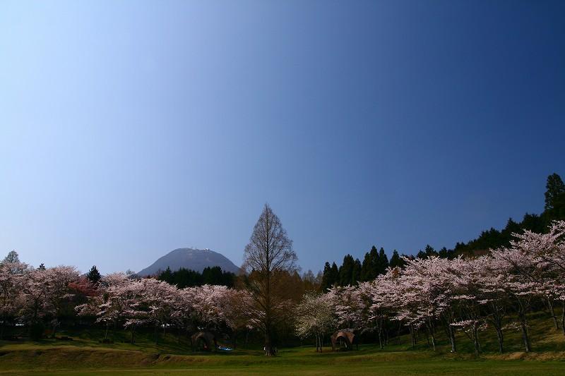 s-桜志高湖鶴見山0080415 082