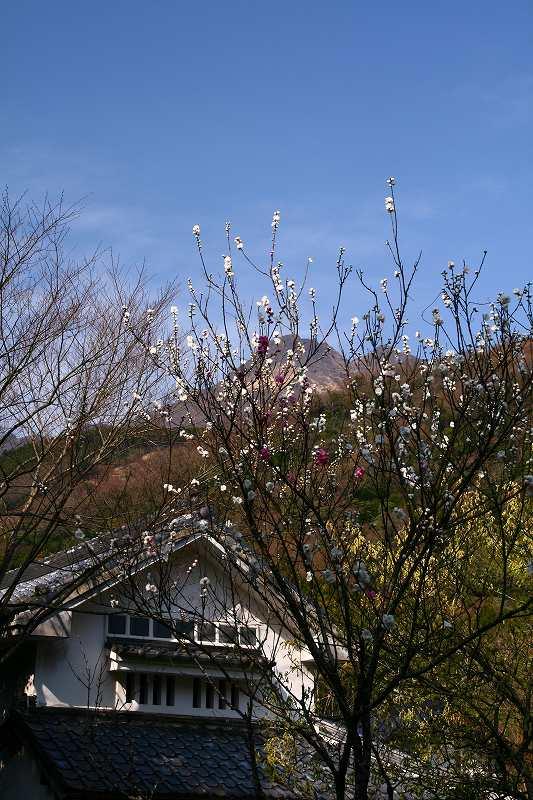 s-桜志高湖湯布院0080412 143
