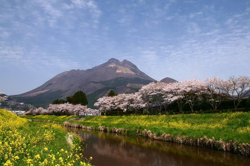 s-桜志高湖湯布院0080412 105