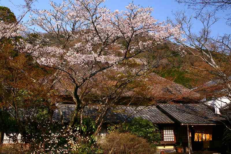s-桜志高湖湯布院0080412 152
