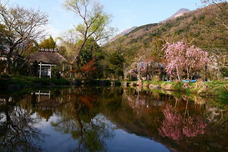 s-桜志高湖湯布院0080412 155