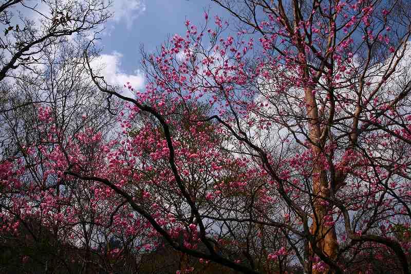 s-夏木山20080426 042