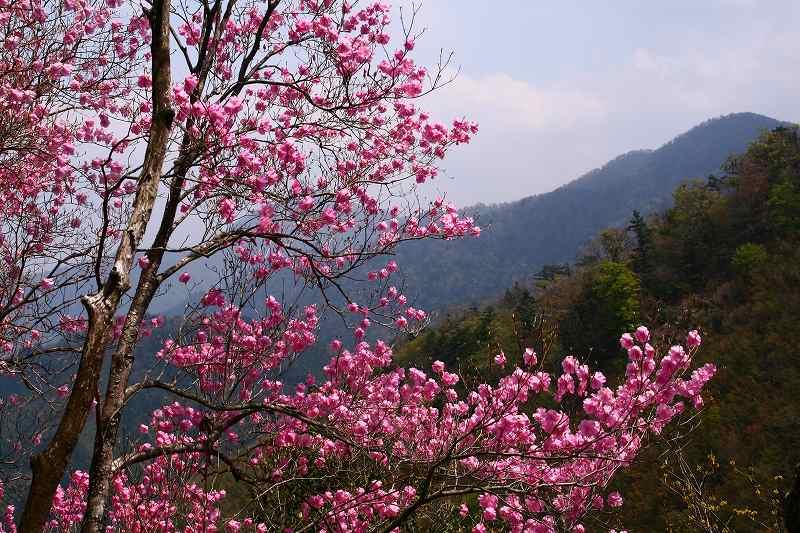 s-夏木山20080426 054