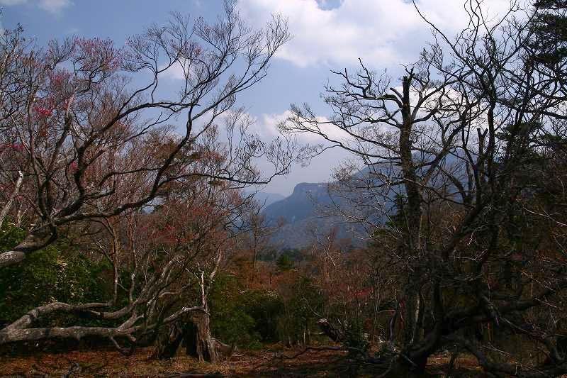 s-夏木山20080426 113