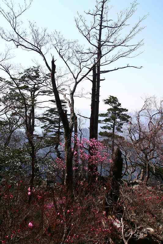 s-夏木山20080426 148