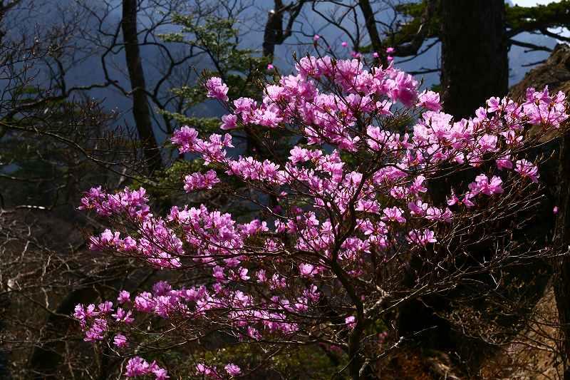 s-夏木山20080426 152