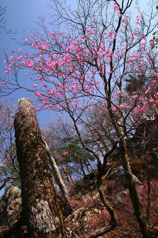 s-夏木山20080426 154
