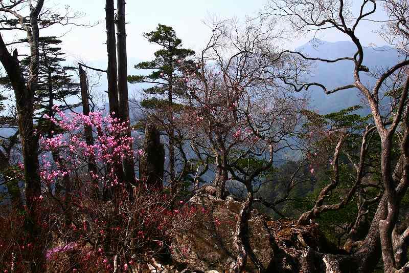 s-夏木山20080426 186