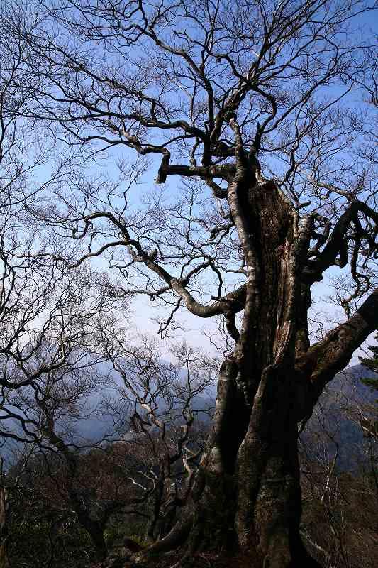 s-夏木山20080426 199