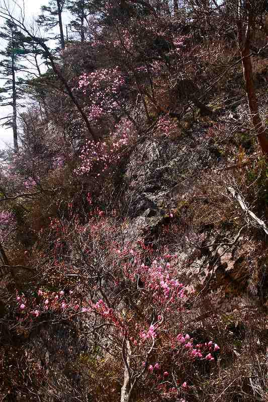 s-夏木山20080426 205