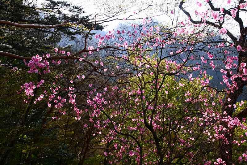 s-夏木山20080426-2 025
