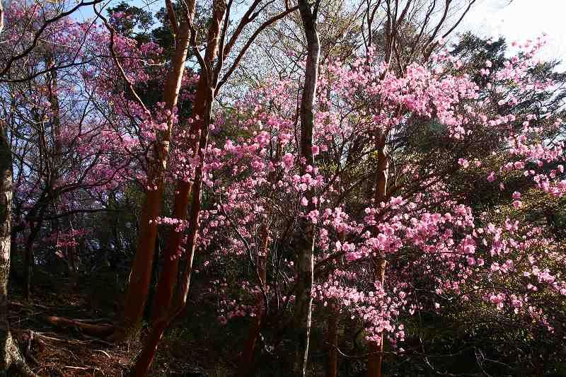 s-夏木山20080426-2 086