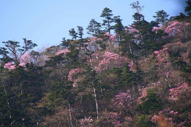 s-大崩山20080429 018